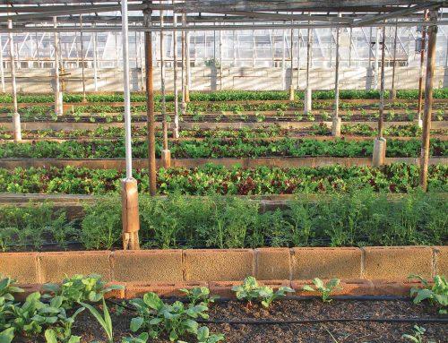 L'agriculture urbaine : mouvement écologique de l'avenir
