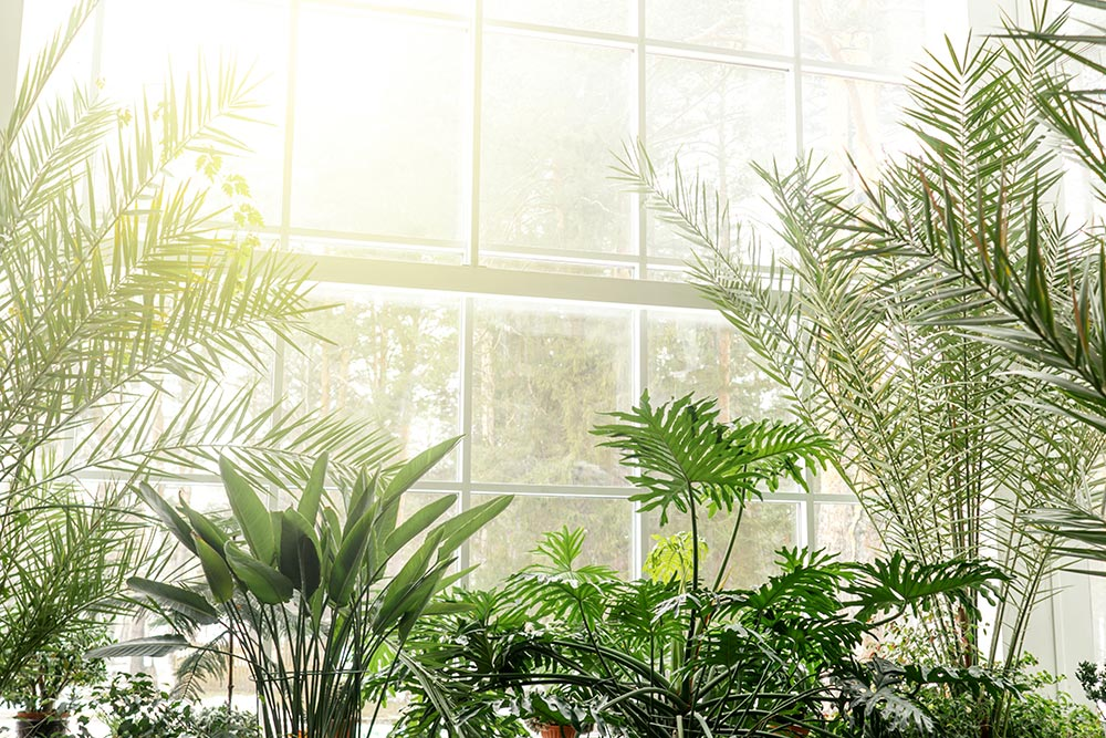 Baie vitrée avec plantes et rayon de soleil qui fait penser à la biophilie