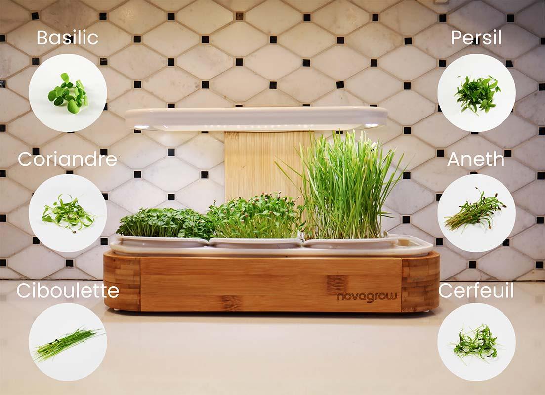 jardin novagrow 1 étage sur comptoir avec pastilles de fines herbes