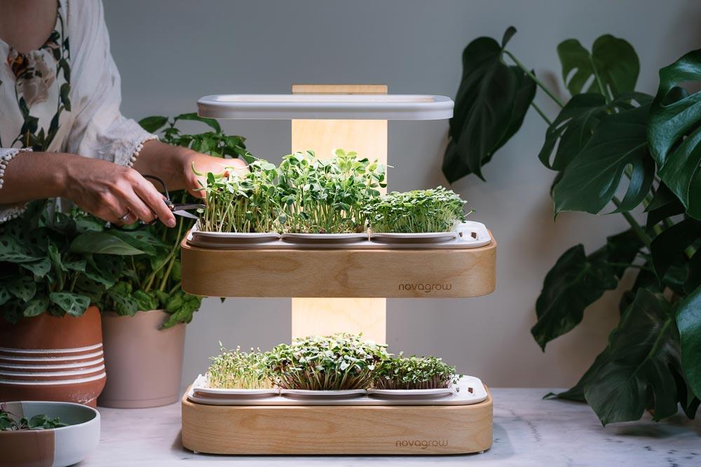 c;liente qui recolte des pousses dans un jardin novagrow